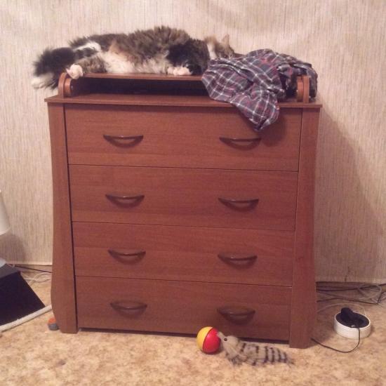 Кот заценил😂комод с пелинальным