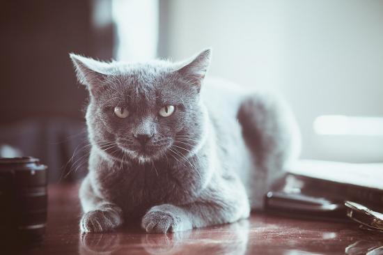 #покажисвоегокота  наш Кот! это