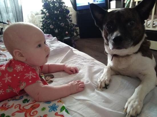 Ребёнок и животные - могут ли они