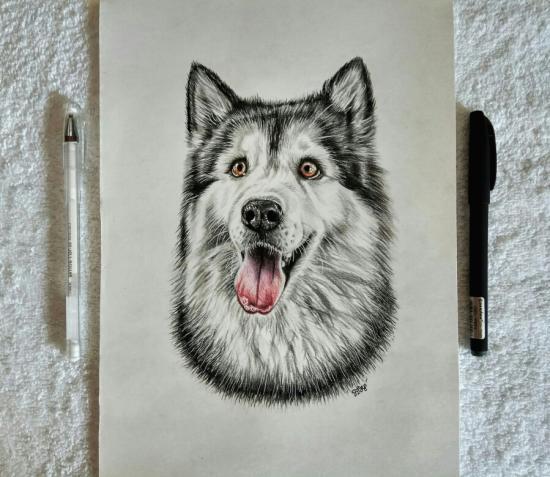 Аляскинский маламут цветными карандашами