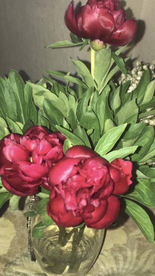 Как же я люблю весенние цветы: