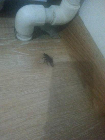 Даже таракан рожает, не то что