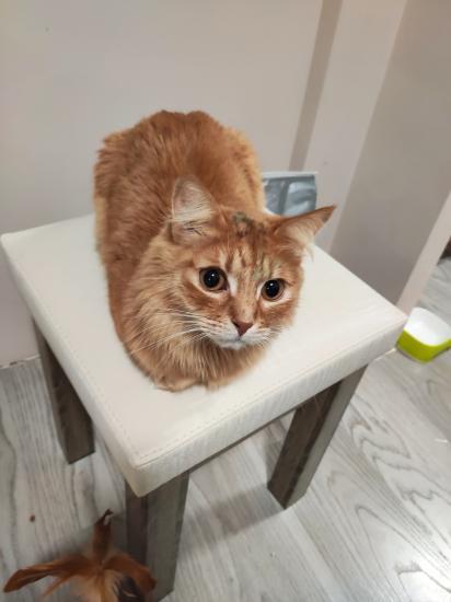 Чем оттереть фломастеры с кошек?