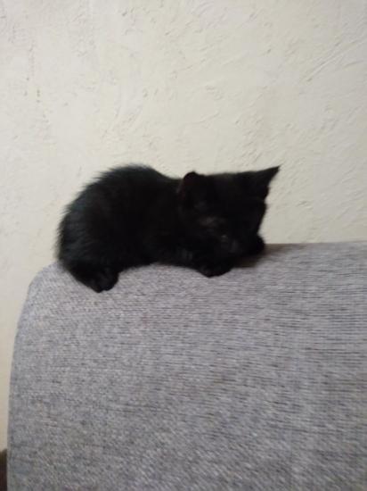 Хорошенькие котята ищут дом! Возраст