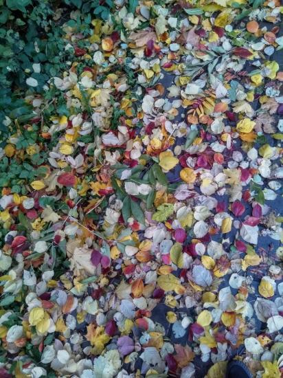 Осенние чипсы хрустят под ногами!