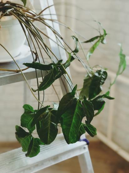 Привет мамочки! Ищу комнатные растения.
