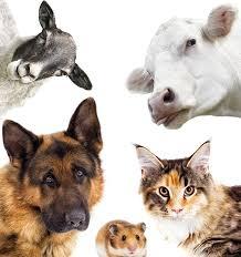 Мой выучил всех животных в год